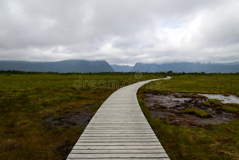 Boardwalk in Gros Morne National Park royalty free stock image