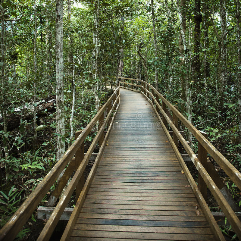 Free Boardwalk In Forest. Royalty Free Stock Photo - 4485545