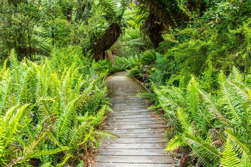 Boardwalk leading through Hastings cave nature reserve temperate rainforest stock photography