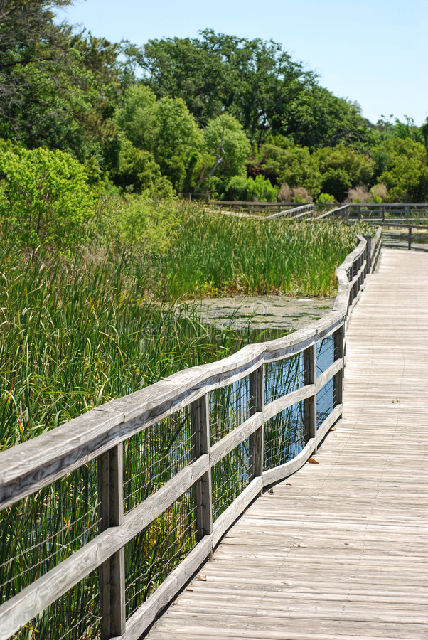 Download Boardwalk in marsh stock photo. Image of line, marsh, boardwalk - 7630662