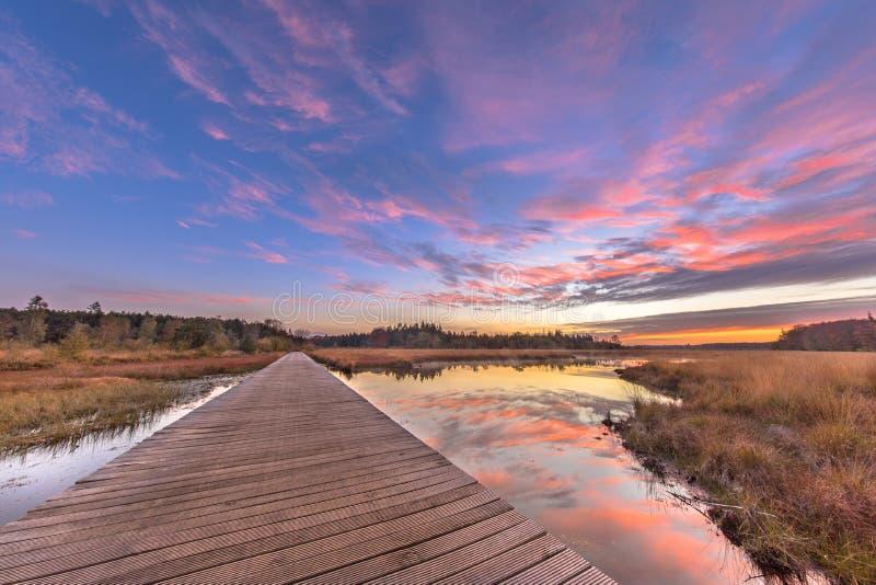 Boardwalk in natural heathland fen crop. Boardwalk in heathland fen nature reserve landscape  in province of Drenthe, Netherlands stock photo