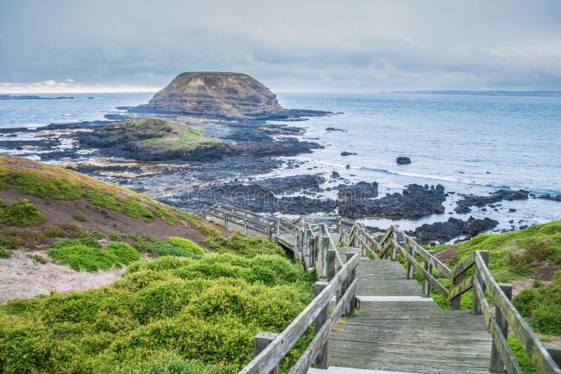 Boardwalk Nobbies konserwaci teren w Phillip wyspie, Wiktoria stan Australia obrazy royalty free