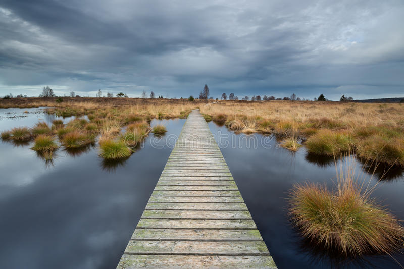 Boardwalk over a lake in heathland in National Park Hautes Fagnes . royalty free stock photo
