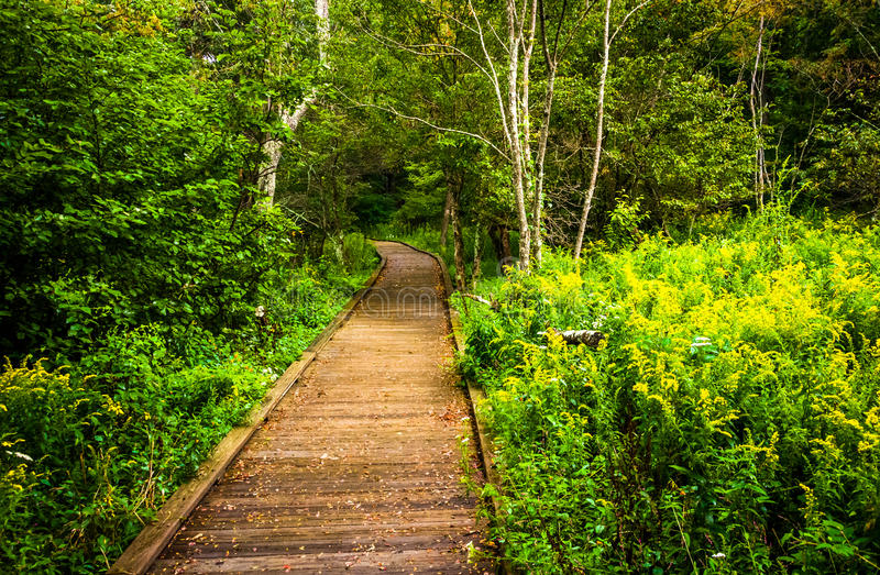 Boardwalk path along the Limberlost Trail in Shenandoah National stock photo
