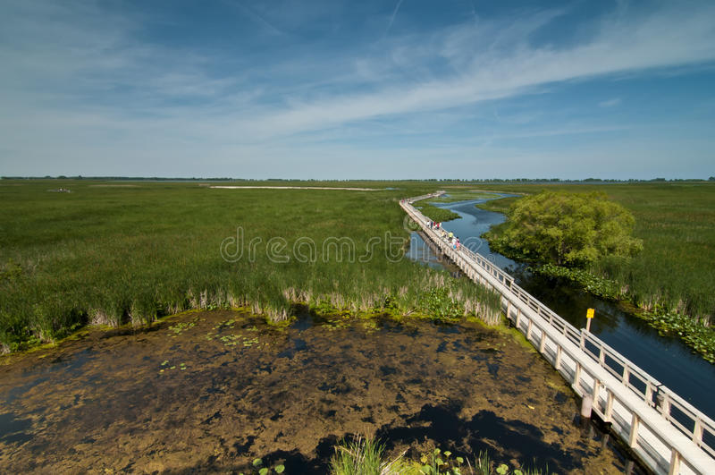 Boardwalk at point pelee marsh land stock photos