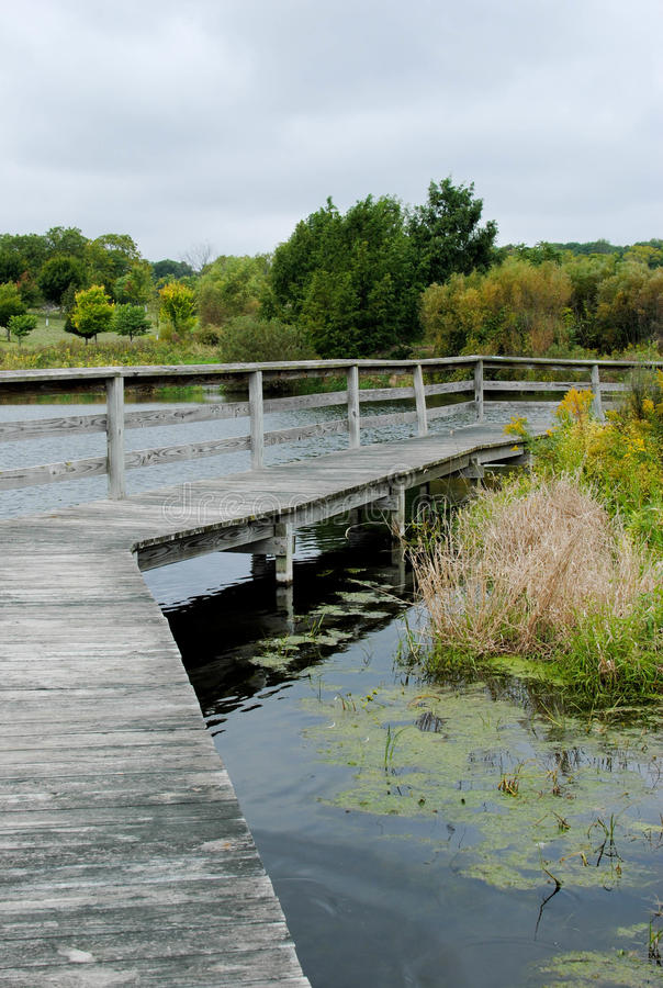 Download Boardwalk through a Pond stock image. Image of center - 21372003