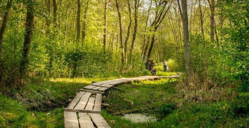 Boardwalk przez lasu obrazy royalty free