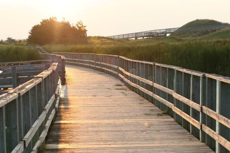 Download Boardwalk on sand dunes stock photo. Image of scen, outdoor - 23748112