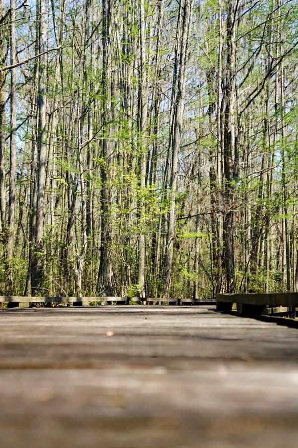 Boardwalk in the Swamp stock image