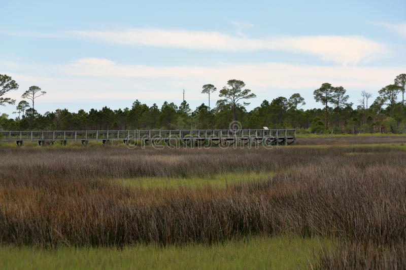 Boardwalk through trees and grasses in a saltwater marsh stock photos