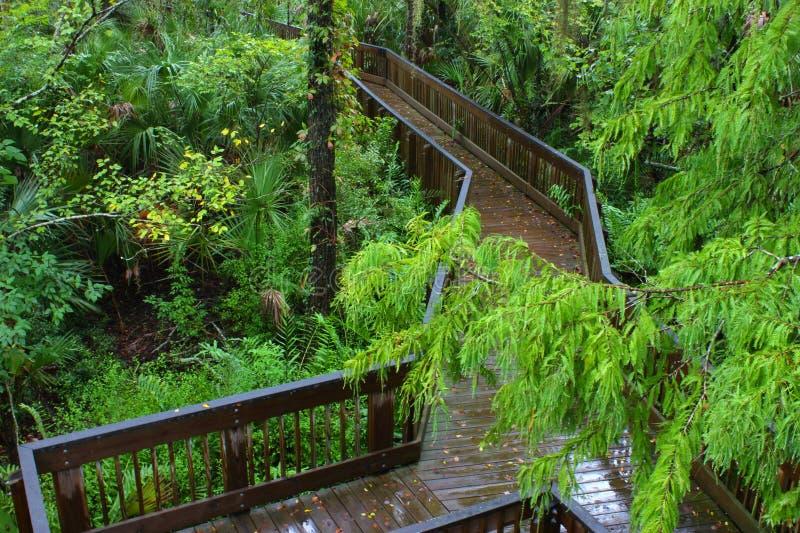 Boardwalk w deszczu zdjęcie stock