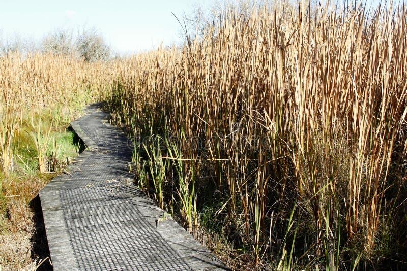 Boardwalk in wetland