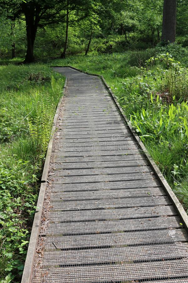 Boardwalk with wire mesh in woodland stock images