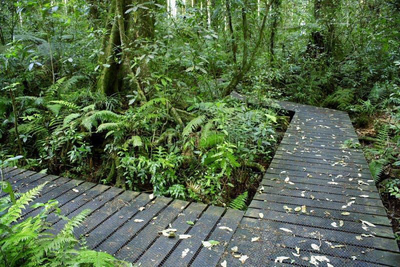 Download Boardwalks stock image. Image of footpath, getaway, lush - 20574377