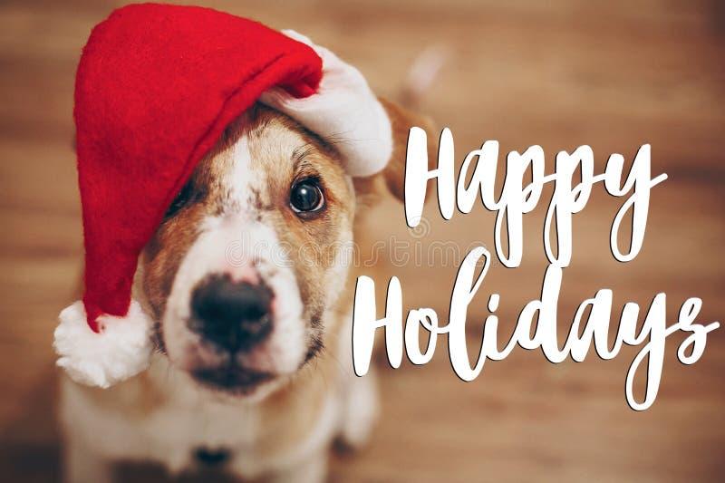 Boas festas texto, sinal sazonal do cartão de cumprimentos cão em Santa foto de stock