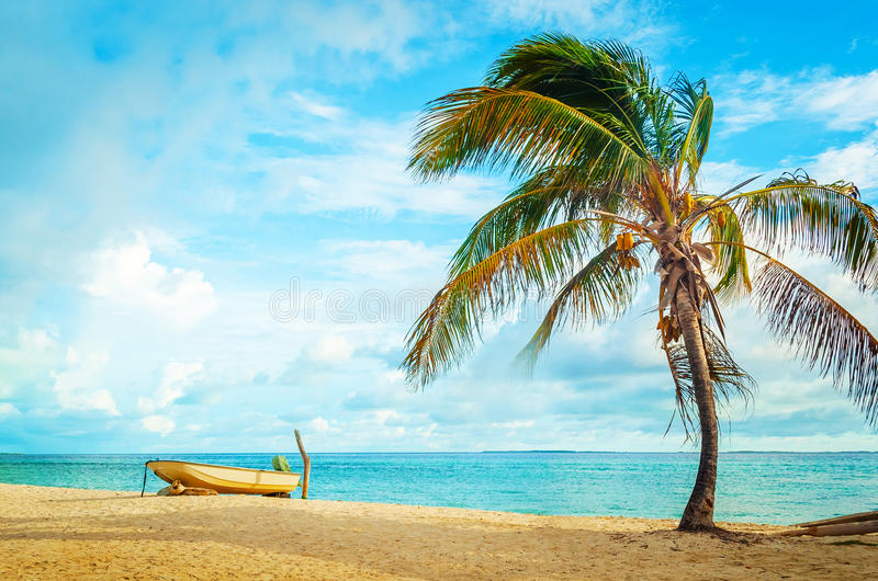 Boat and coconut tree on caribbean beach royalty free stock images