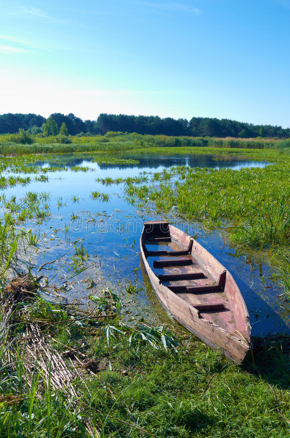 Boat. In a high cane on the bank of lake stock photo