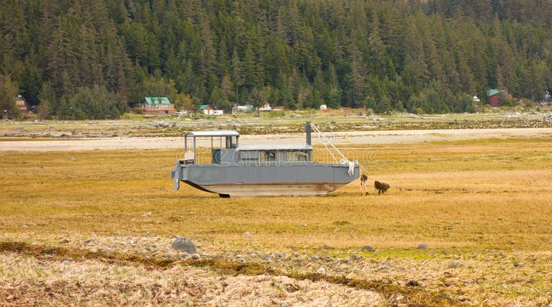A boat high and dry at haines. A vessel as seen at low tide in alaska royalty free stock photo