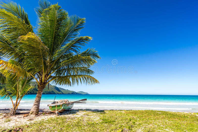 Boat by palm tree on one of the most beautiful tropical beaches in Caribbean, Playa Rincon royalty free stock image