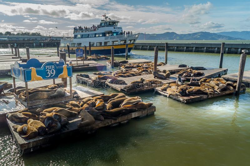 Ferry and Sea Lions in Pier 39 stock photos