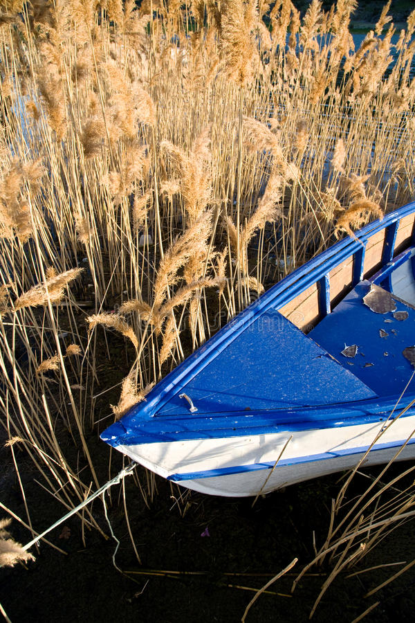 Download Boat and reed stock image. Image of plant, lake, reed - 14297233