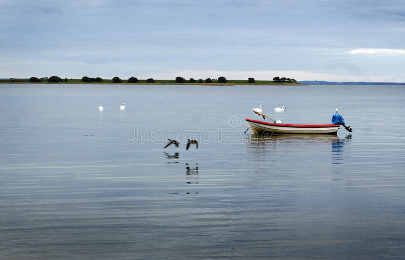 Boat, swans and ducks royalty free stock images