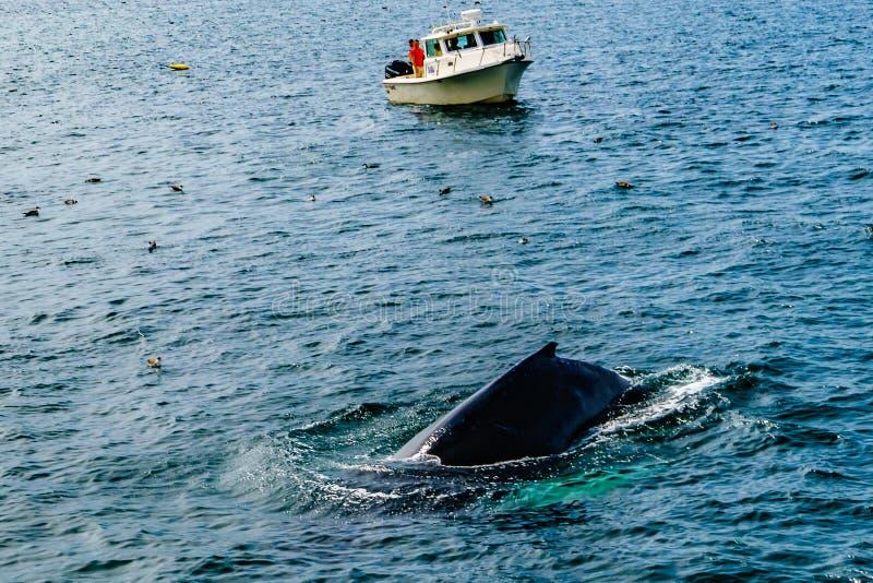 Boat and whale, Cape Cod, Massachusetts, US. Boat and whale, Cape Cod, Massachusetts US stock photos