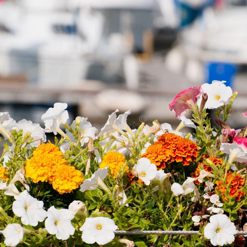 Download Boating Bokeh stock photo. Image of sailboat, petunia - 28150506