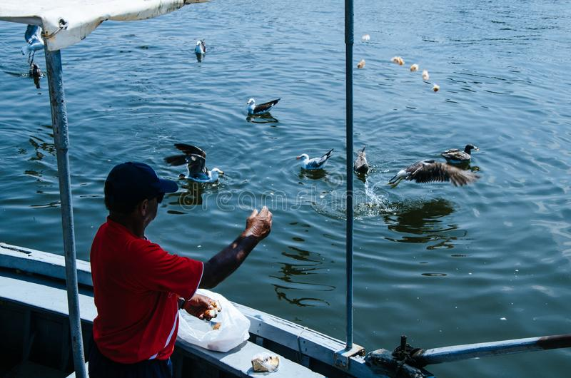 Boatman and seagulls. Boatman throwing some food to the seagulls royalty free stock photos