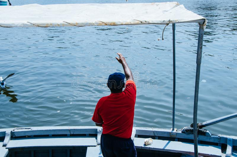 Boatman and seagulls. Boatman throwing some food to the seagulls stock photography