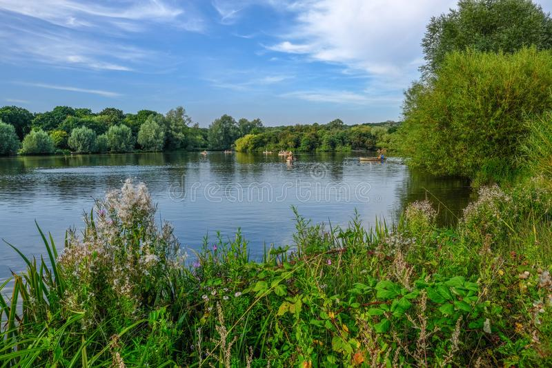 Boats on the lake in a country park on a summer day. Wild plants in the foreground stock photography