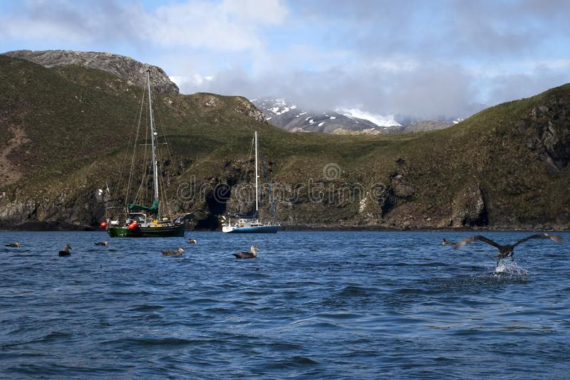 Boats moored in bay with southern giant petrel birds on the water stock image