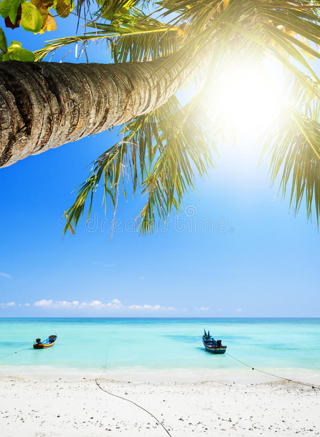 Download Tropical Beach Royalty Free Stock Image - Image: 29971706