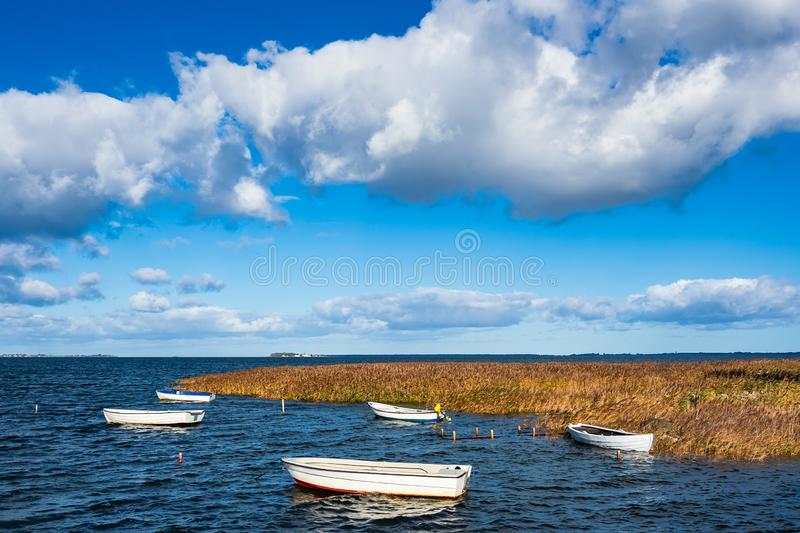 Boats and reeds on the Baltic Sea in Denmark.  stock photos