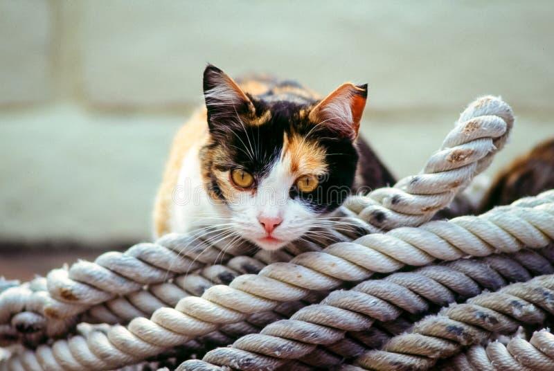 Boatyardkatze, die auf aufgerollten Seilen stillsteht stockfotografie
