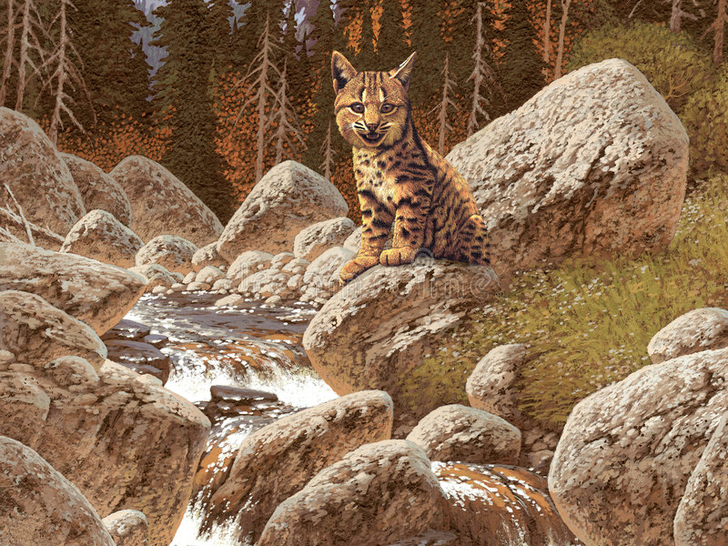 Download Bobcat stock illustration. Image of river, bobcat, wilderness - 526170