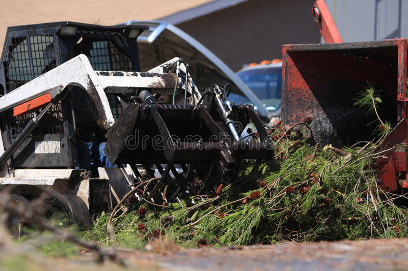 Bobcat Loading Pine Branches Into Mulcher Royalty Free Stock Image