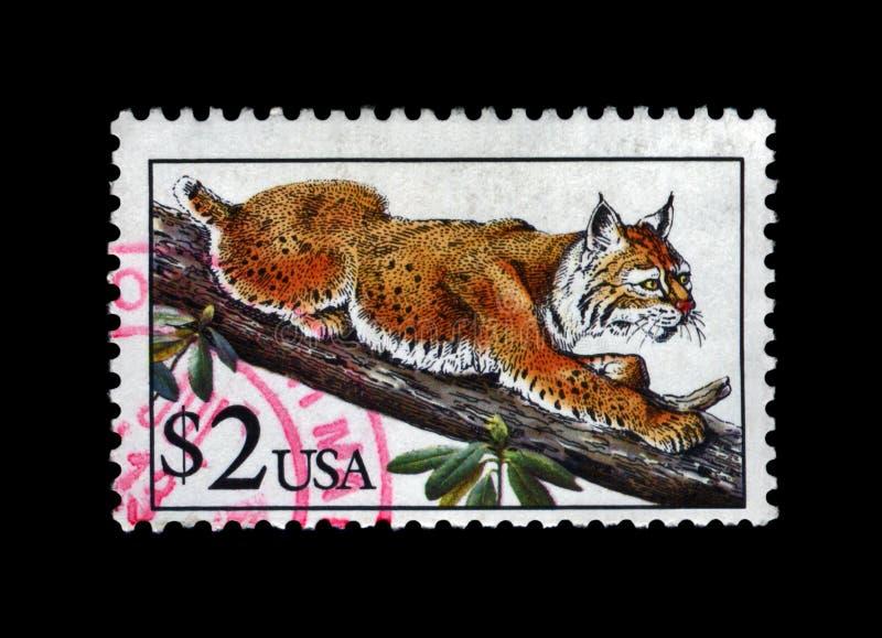 Bobcat lynx, circa 1995,. USA - CIRCA 1995: stamp printed in USA, shows bobcat lynx, circa 1995. vintage post stamp isolated on black background stock image
