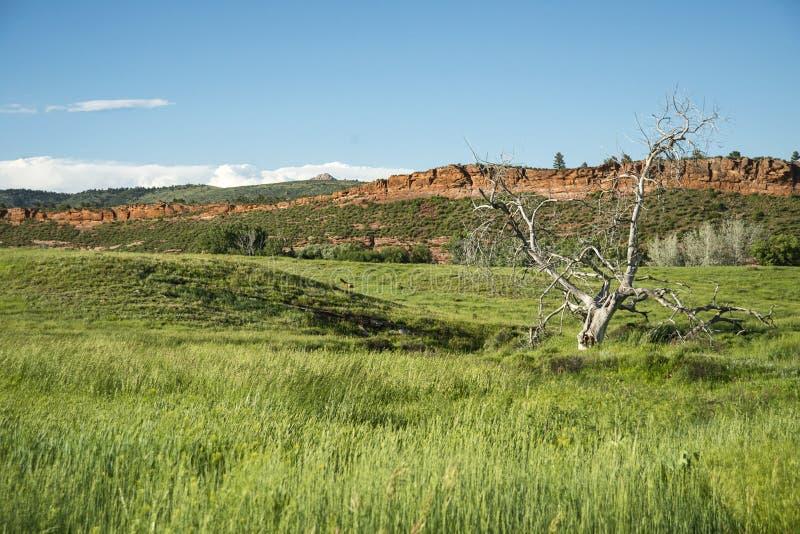 Bobcat Ridge fotografering för bildbyråer