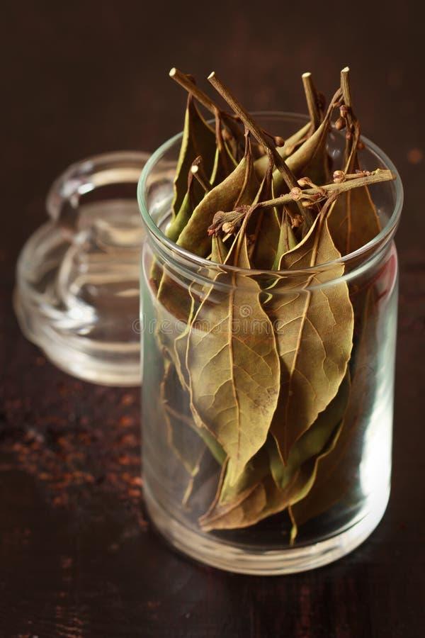 Bobek zatoki liście. zdjęcie stock