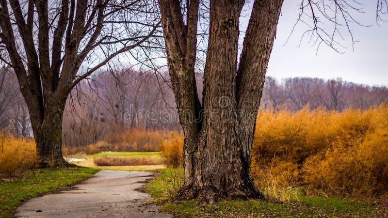 Bobina de la trayectoria a través del campo de golf overgrown foto de archivo