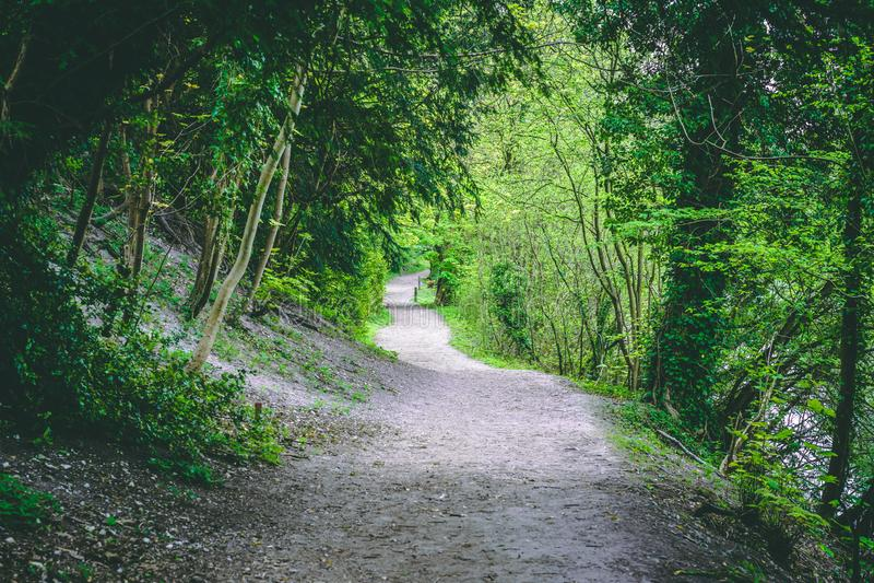 Bobina Forest Hiking Trail Green Foliage imagen de archivo libre de regalías