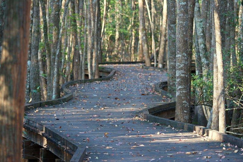 Bobina Forest Path en el bosque fotografía de archivo