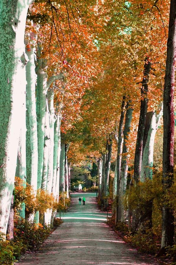 Boboli arbeta i trädgården i Florence, Italien arkivbilder