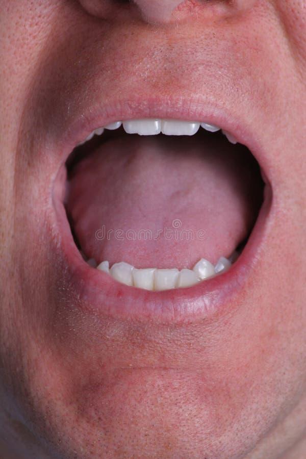 Boca aberta do macho com dentes e lingüeta foto de stock