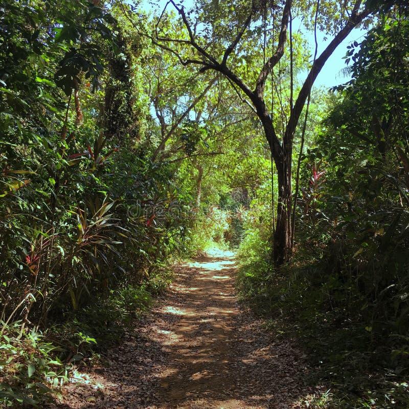 Boca Brava Island stock afbeeldingen