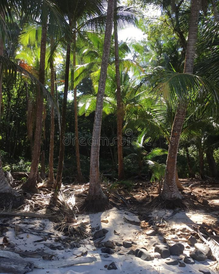 Boca Brava Island royalty-vrije stock foto