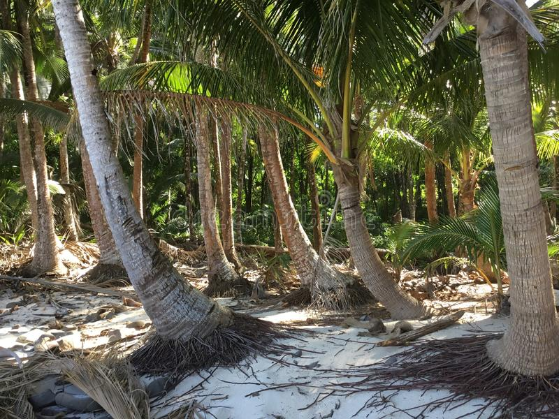 Boca Brava Island royalty-vrije stock afbeelding