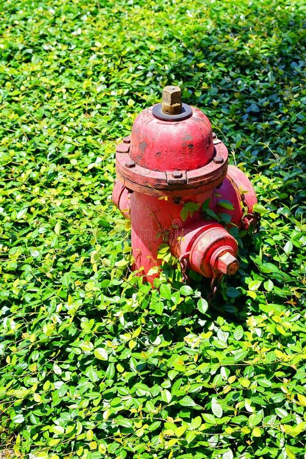 Boca de incêndio de fogo vermelho com em grama fotografia de stock