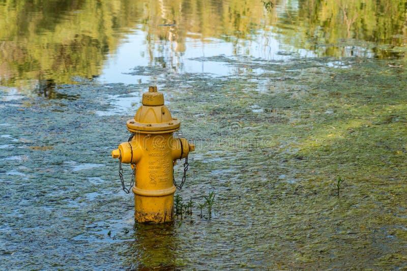 Boca de incêndio de fogo amarela na água durante inundações imagens de stock